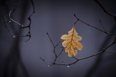 Солитарные листья стоковые фотографии rf