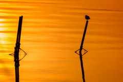 Солитарный восход солнца Стоковые Изображения RF