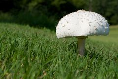 Солитарный гриб Стоковое фото RF