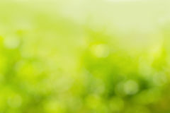 Солнечная абстрактная зеленая предпосылка природы Стоковая Фотография