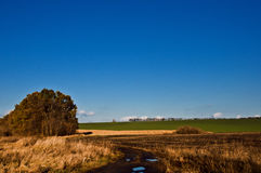 Солнечная мозоль и пшеница поля дня осени стоковая фотография rf