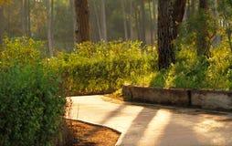 Солнечная дорога в зеленом лесе Стоковые Изображения