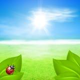 Солнечная предпосылка с зеленой травой и ladybird Стоковое Фото