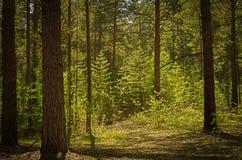 Солнечная расчистка в лесе на летний день стоковое изображение rf