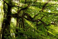 Солнечний свет в зеленой пуще, время весны Стоковые Фото