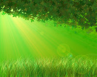 солнечний свет листьев осени Стоковое Фото