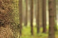 солнечний свет дуба пущи конструкции граници предпосылки осени жолудей Стоковое Фото