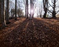 солнечний свет дуба пущи конструкции граници предпосылки осени жолудей Стоковое Изображение