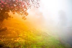 солнечний свет дуба пущи конструкции граници предпосылки осени жолудей Стоковое фото RF