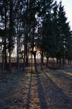 Солнечний свет через валы Стоковые Изображения RF