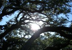 Солнечний свет через деревья Стоковая Фотография