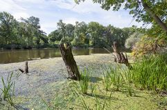 Солнечное болото с стволами дерева Стоковые Фото