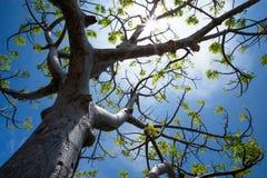Солнечное дерево Стоковое Изображение RF