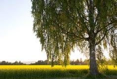 Солнечное после полудня Стоковое Изображение