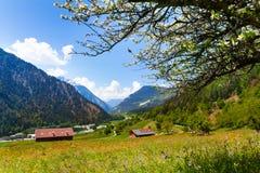 Солнечное поле цветков около швейцарских гор Стоковые Изображения