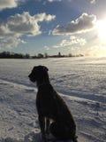 Солнечное созерцание зимы стоковое изображение