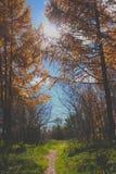 Солнечное утро осени в России Стоковая Фотография RF