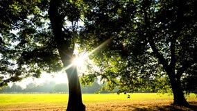 Солнечность в парке Стоковая Фотография RF