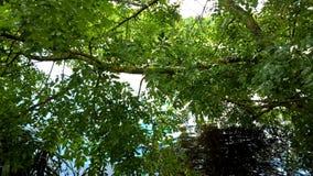 Солнечность в парке Стоковая Фотография