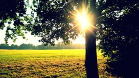 Солнечность в парке Стоковые Изображения RF