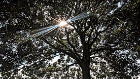 Солнечность в парке Стоковые Изображения