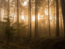 Солнечность в древесине стоковое фото rf