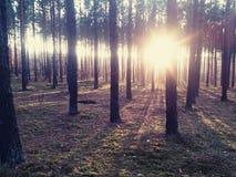 Солнечность леса Стоковые Фотографии RF