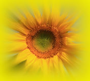 Солнечность лета стоковое фото rf