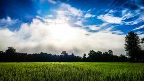 Солнечность, рис и небо Стоковое фото RF