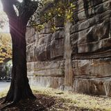 Солнечность утра на дереве и утесах Стоковое Фото