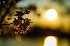 Солнечность цветка Стоковое фото RF