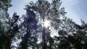 Солнечность через деревья Стоковая Фотография RF