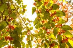 Солнечность через лозы Стоковые Фото