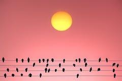 Солнечные зрители Стоковые Фотографии RF