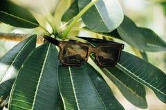 Солнечные очки висят на ветви с зелеными листьями Стоковое фото RF