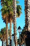 Солнечные пальмы и столбы лампы Стоковые Фотографии RF