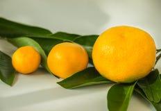 Солнечные плодоовощи осени Стоковые Изображения RF