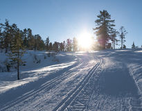 Солнечные следы лыжи стоковая фотография rf