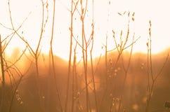 Солнечные уплотнения Стоковые Фотографии RF