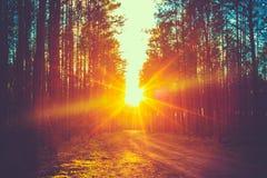 Солнечные лучи захода солнца дороги леса Стоковое фото RF