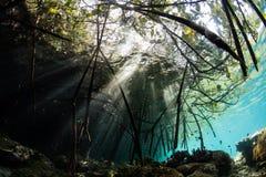 Солнечные лучи и лес мангровы в радже Ampat Стоковое Изображение RF