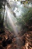 солнечные лучи светя через туманный тропический лес Стоковые Изображения RF