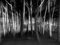 Солнечные лучи через деревья Стоковое Изображение RF