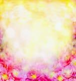 Солнечные цветки пинка лета запачкали предпосылку Стоковые Фото