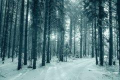 Солнечный ландшафт леса зимы Стоковая Фотография RF