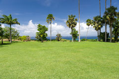 Солнечный ландшафт с пальмами и океаном в Барбадос, Кариб Стоковые Фотографии RF