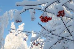 Солнечный день в лесе зимы, ural горы, лес зимы, русское natu Стоковая Фотография RF