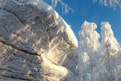 Солнечный день в лесе зимы, ural горы, лес зимы, русское natu Стоковое Изображение