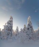 Солнечный день в лесе зимы, ural горы, лес зимы, русское natu Стоковое фото RF