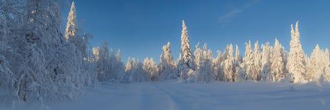Солнечный день в лесе зимы, ural горы, лес зимы, русское natu Стоковое Изображение RF